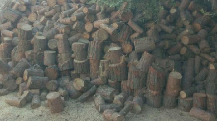 Les forces d'occupation turques et leurs supplétifs djihadistes continuent d'abattre des arbres dans la région occupée d' Afrin, au nord de la Syrie.