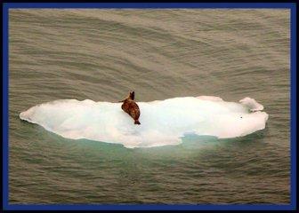Sep08-Greenland Ice-Seal
