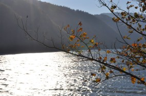 HERBST_Roland Wegerer_Along the Danube_02