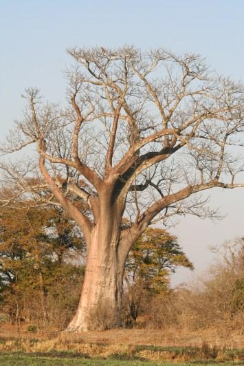 zambia 2011 510