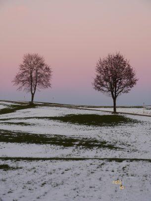 Zwei Bäume auf einem Feld im Allgäu