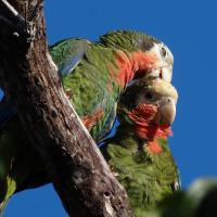 BIRD POST INDEX