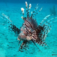 5 CREATURES ON ABACO THAT YOU MAY WISH TO AVOID...