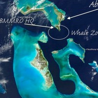 BAHAMAS WHALES & DOLPHINS IN ABACO & ANDROS WATERS