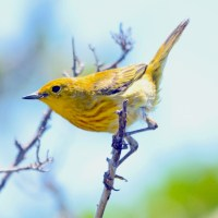 A GALLERY OF GORGEOUS: ABACO BIRDS ON DISPLAY