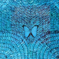 BAHAMAS REEF FISH (36): REEF BUTTERFLYFISH