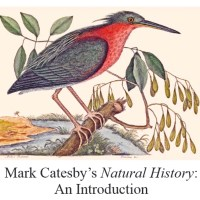 MARK CATESBY, PIONEER NATURALIST: NEW BOOK