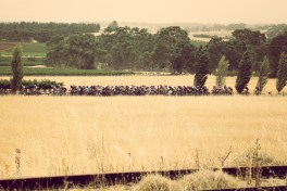 The peloton battle the winds