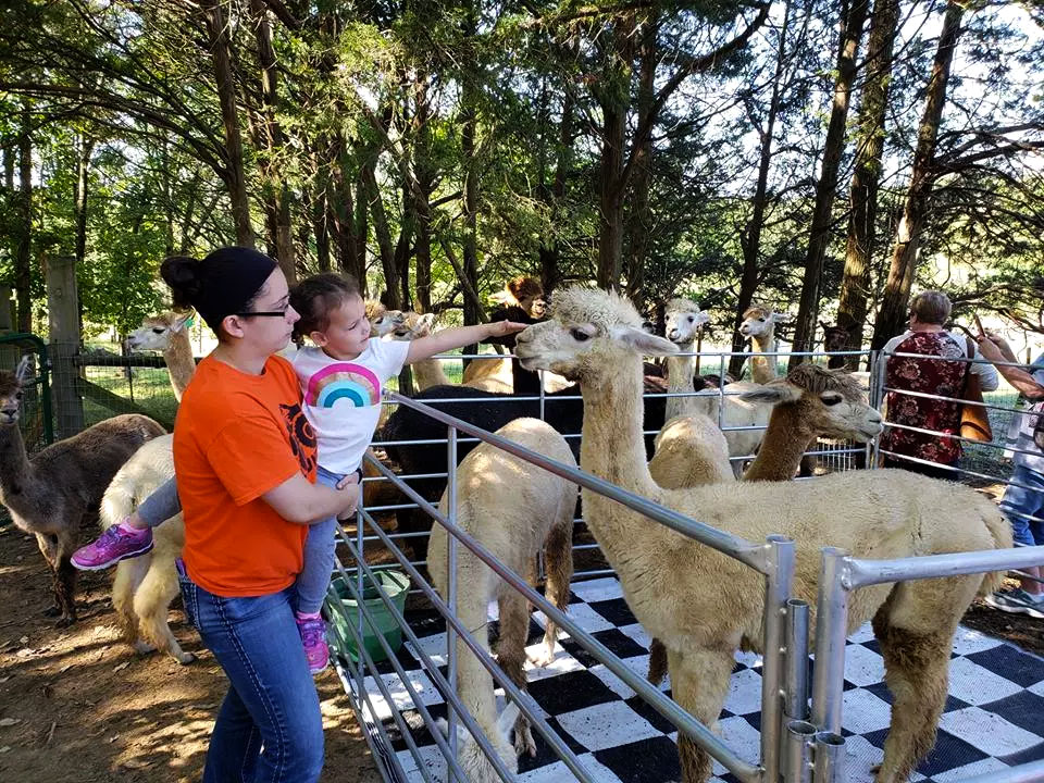 Tour Our Southern Illinois Alpaca Ranch
