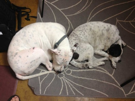 Bonzai-and-Zeke-curled-up-in-office