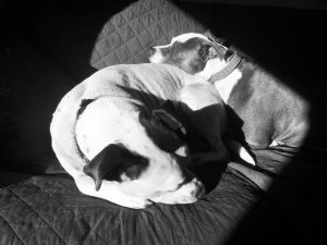 Dazey and Enzo Snoozing in the sunlight