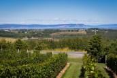 Nova Scotia Wineries Luckett-6