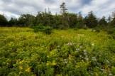cabot-trail_nova-scotia-58