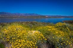 Arizona_Phoenix_Route 188_1648