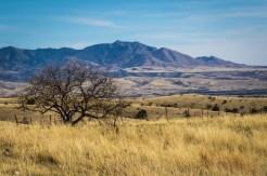 Arizona_Tucson_Coronado National Forest_6377