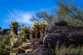 Arizona_Tucson_Tucson Mountain Park_1115
