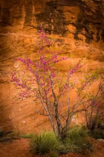 Arizona_Rainbow Bridge_Lake Powell_7266