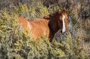 Big Horn Natl Recreation Area, Montana-0795
