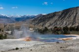 Yellowstone-Mammoth Hot Springs-7460