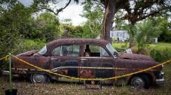 Florida_Everglades_Loop Road_9616