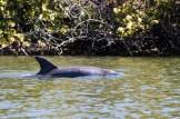 Lover's Key State Park-Kayaking_2372