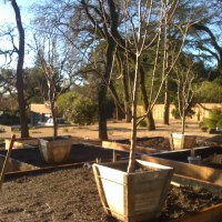 Planter Boxes for Fruit Trees