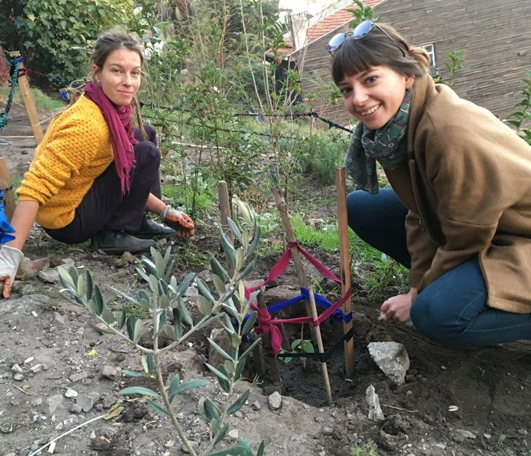 Roma Community Garden Reunited with Alakır Nehri