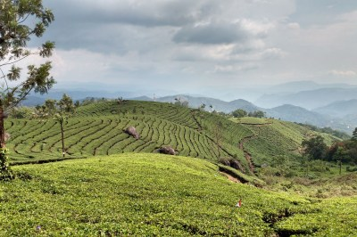 Exploring Western Ghats : Part 7 : Munnar