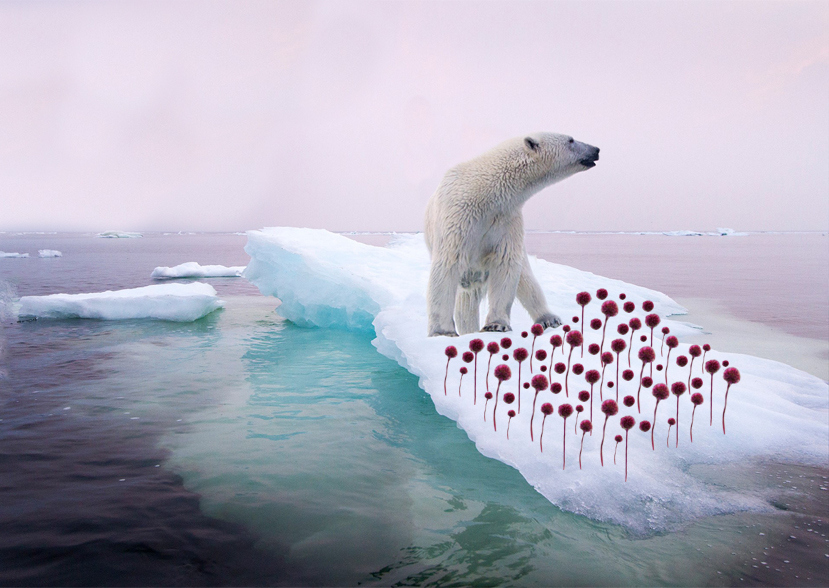 Eisbären im Sommer