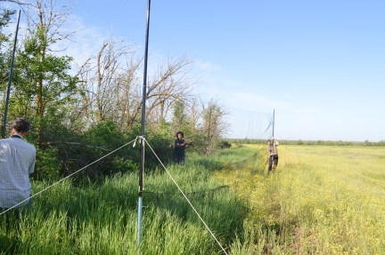 We (Benoit Fontaine, Maxime Zucca and me) are setting up two mist nets in the Volgograd district
