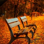 park benches in autumn