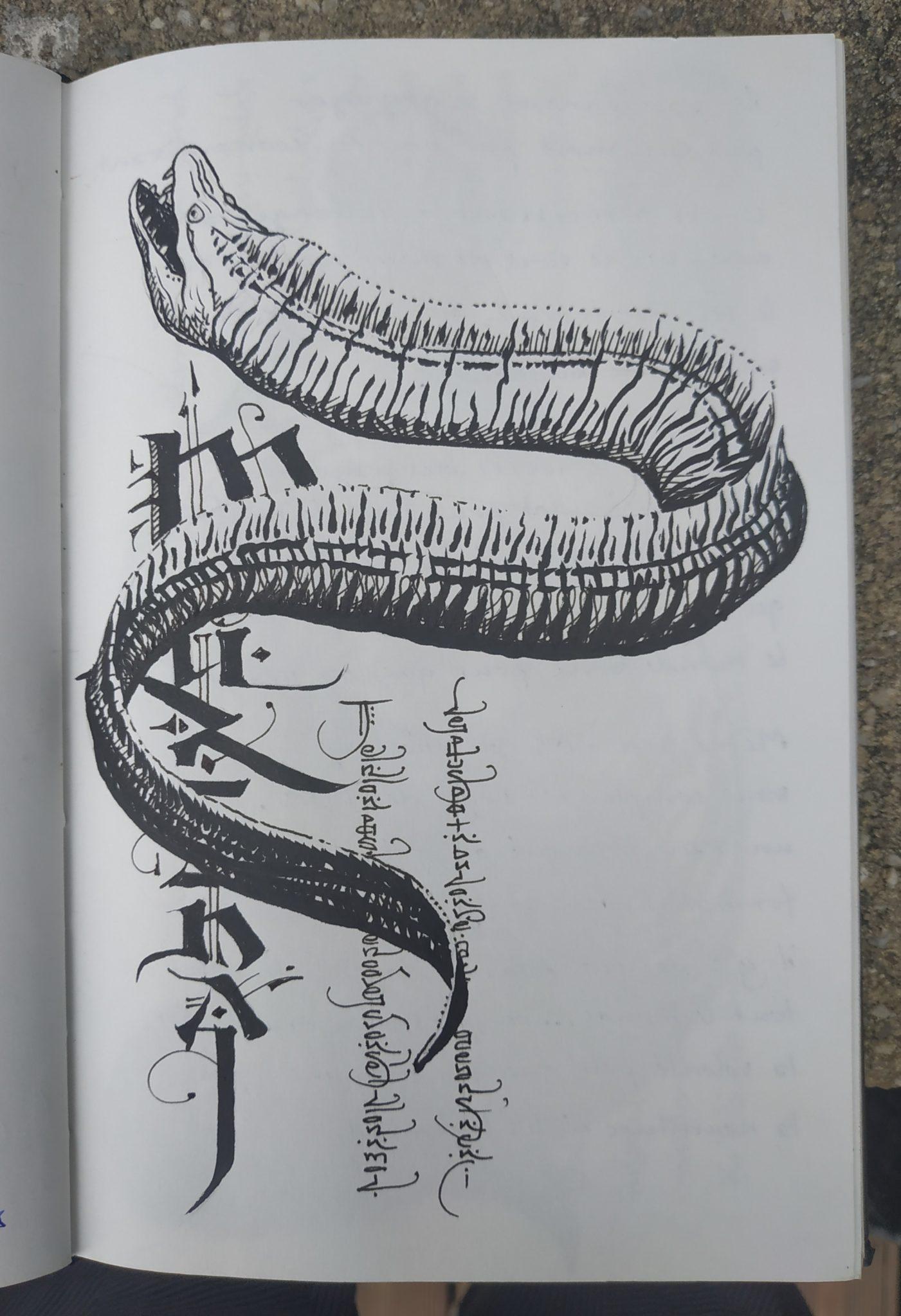 Murène (dessin)
