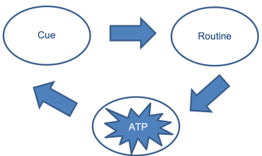 The Habit Loop ATP