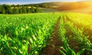 Parlamentul a decis astăzi: Se INTERZICE vânzarea de terenuri românești către cetățeni străini 42