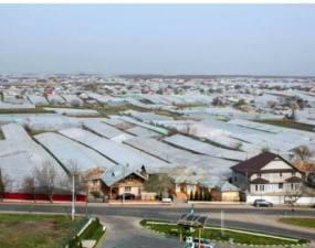 """Satul cu cel mai scump pământ din România. Un hectar este de trei ori mai scump decât în Olanda. """"La noi sunt doar vreo 30-40 de persoane la ajutor social. Sunt oameni bolnavi, care nu pot munci. În rest, toată lumea e la muncă, nu la întins mâna"""" 3"""