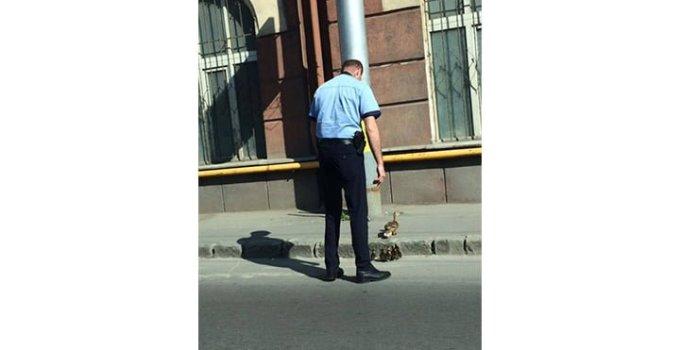 Cel mai tare polițist din România? A ajutat o familie de rațe să treacă o stradă superaglomerată dintr-un mare oraș al țării 1