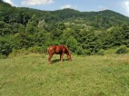 luanas-land-horses-carpathian-mountains romania