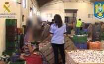 Castilla-La Mancha: Români exploataţi la cules de usturoi în provincia Cuenca