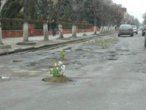 (The town of Коломия) Potholes blossom like wild flower.