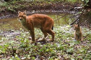 Chernobyl-cat