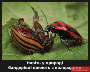 Bandera-Bug
