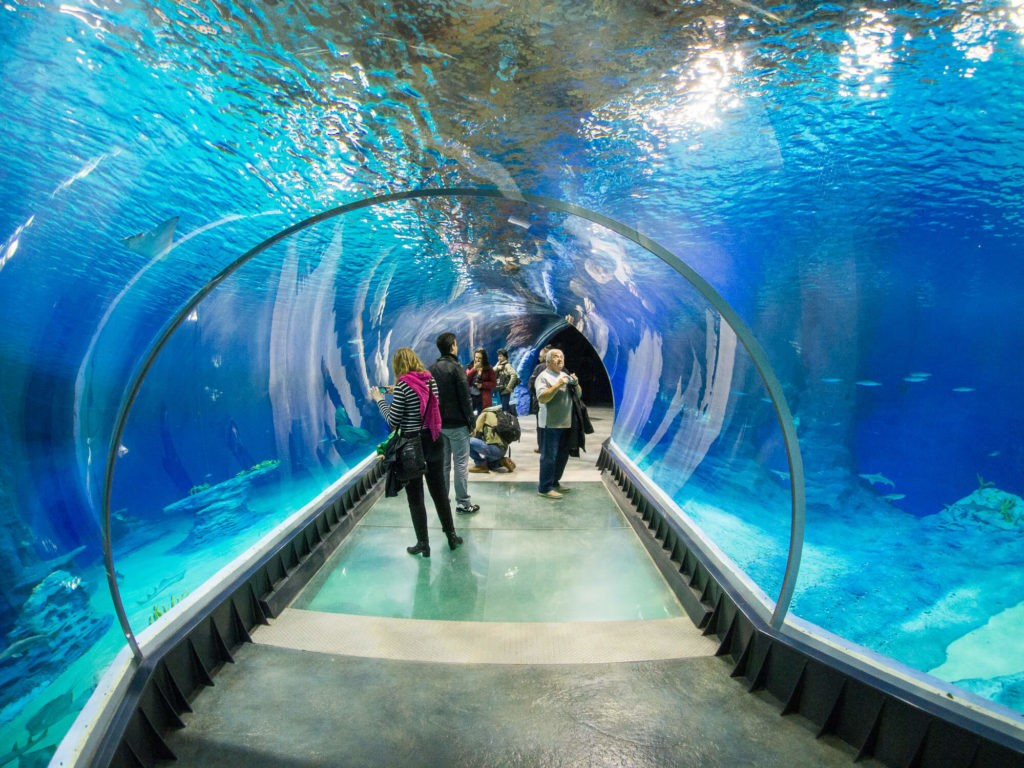 Aquarium in Gdynia, one of main attractions