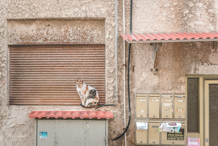 Cats of Israel Catography