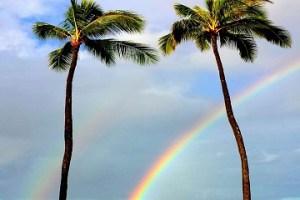 ダブルレインボー、ハワイ、ヤシの木、ロミロミ