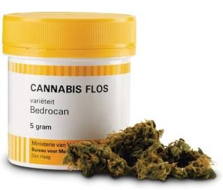 cannabis bedrocan romina malizia blog