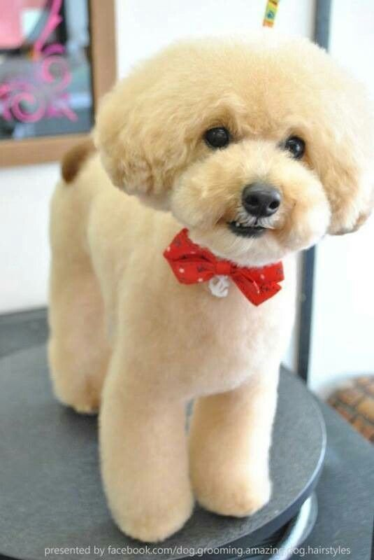 The Best Pin By Simone Normand On Dog Grooming Dog Grooming Pictures