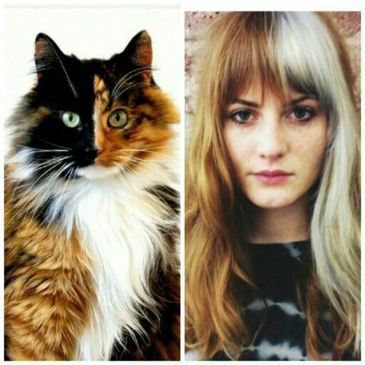 The Best 2015 Trend Forecast Calico Haircolor By Bleach London Pictures