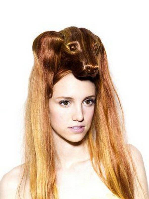 The Best Weird Creative Funny Animal Hairstyles Pictures