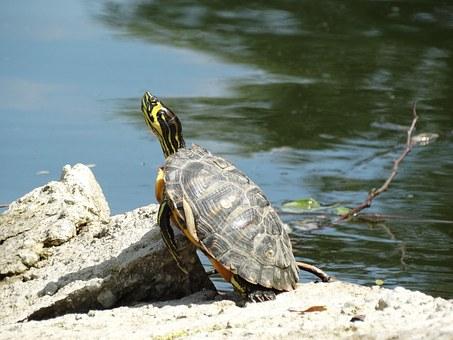 turtle 765679 340