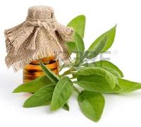 orvosi zsálya ,amire szervezetünknek szüksége van+dezodor recept